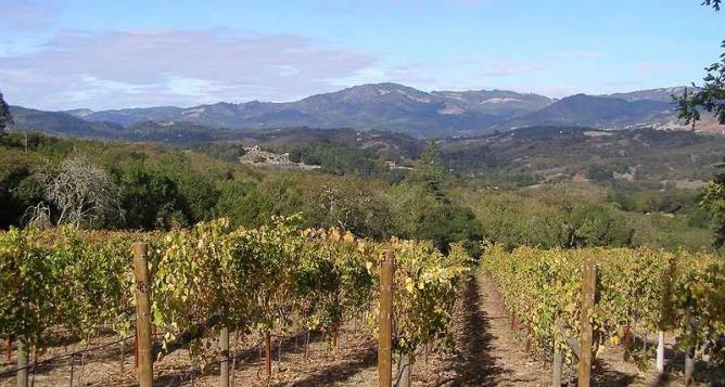 A vineyard in Sonoma | © Anlace/WikiCommons