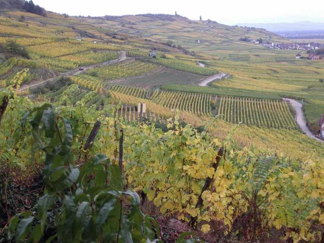Alsatian vineyard | © Florian_fr/WikiCommons