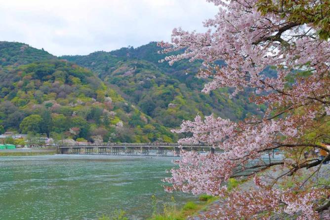 Togetsu Bridge in sakura season