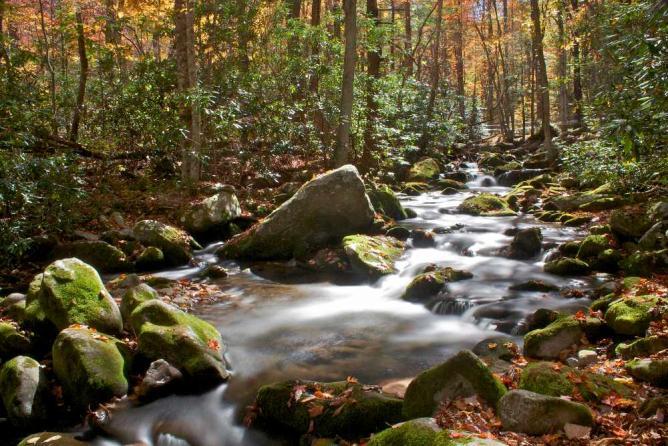 Smoky Mountain Brook in Fall