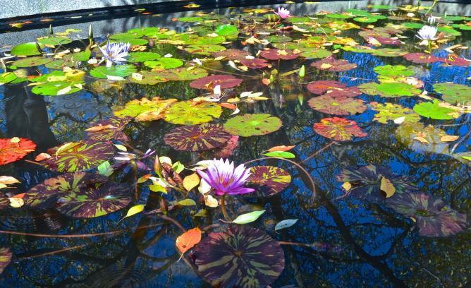 Lily pond at the Conservatory Gardens | © David McSpadden/Flickr
