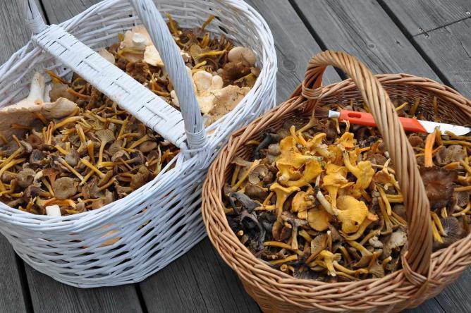 Mushrooms | © Lena Sparring/Pixabay
