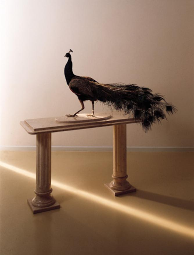 Gideon Gechtman, Peacock, 1999 | © The Israel Museum, Jerusalem/WikiCommons
