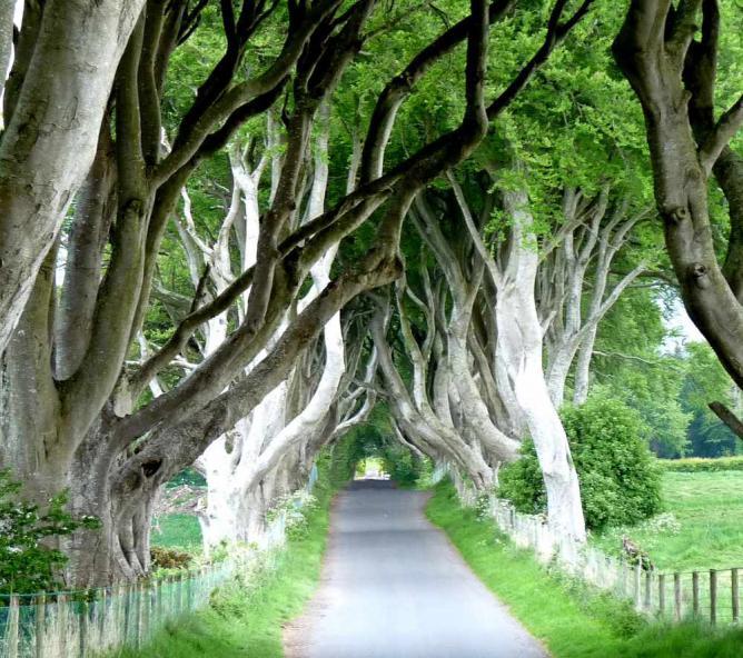 The Dark Hedges, Ballymoney   © murielle29/Flickr