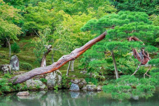 Tenryu-ji grounds