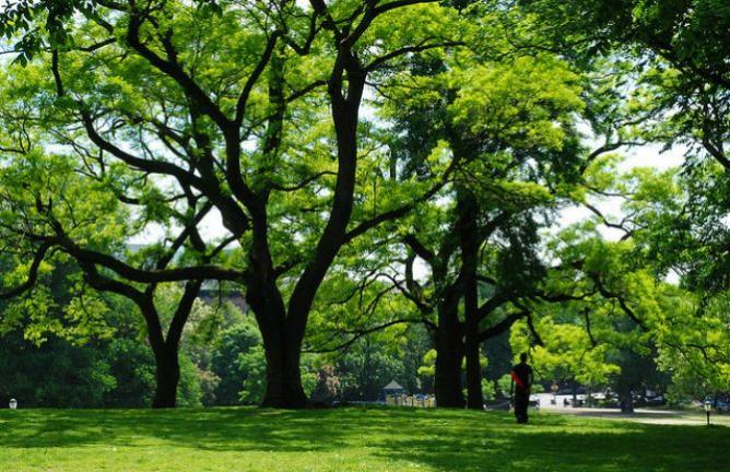 Fort Greene Park   © Francisco Daum/Flickr