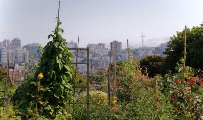 Fort Mason Community Garden, San Francisco | © Orin Zebest/WikiCommons