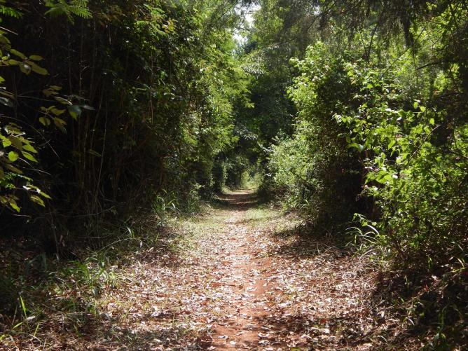 A Section of the Biking Trail At Karura Forest | Courtesy Imani Jaoko