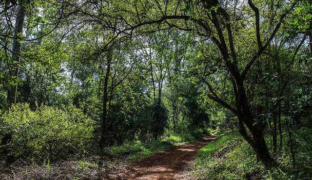 A section of the walking trail at Karura Forest | © Ninara/Flickr