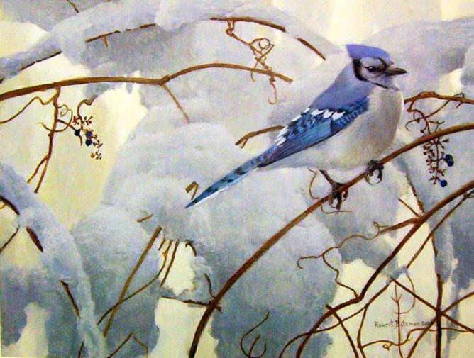 "Robert Bateman ""Snowy Morning - Blue Jay"" c.2000"