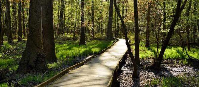 Congaree National Park | © BlakeLewisPhotography/Flickr