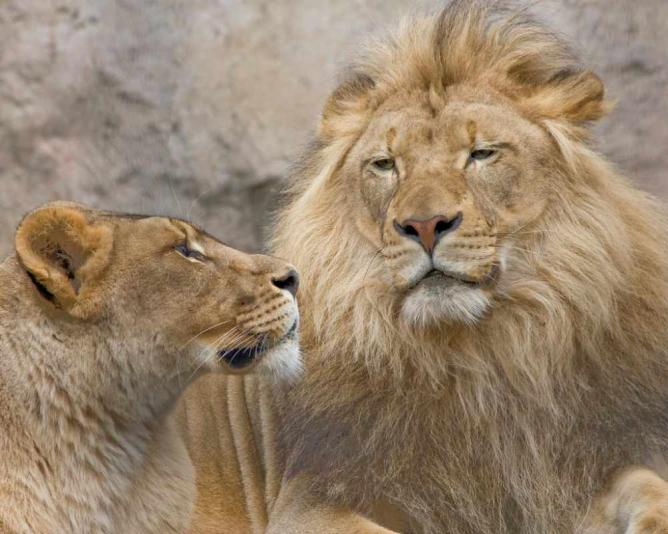 King and Queen of Sacramento Zoo | © Mitch Lorens/Flickr