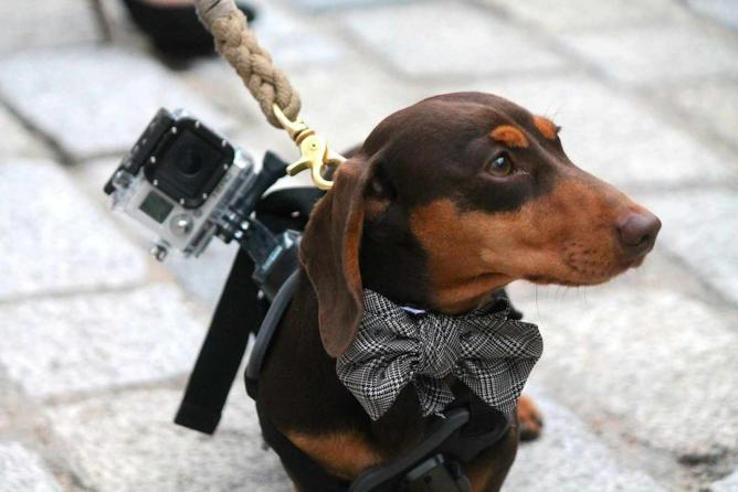 Doggie couture   Photo by Alice Burns
