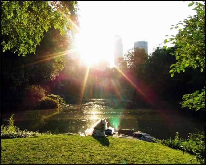 Dog in the Sun | © Tony Fischer/Flickr