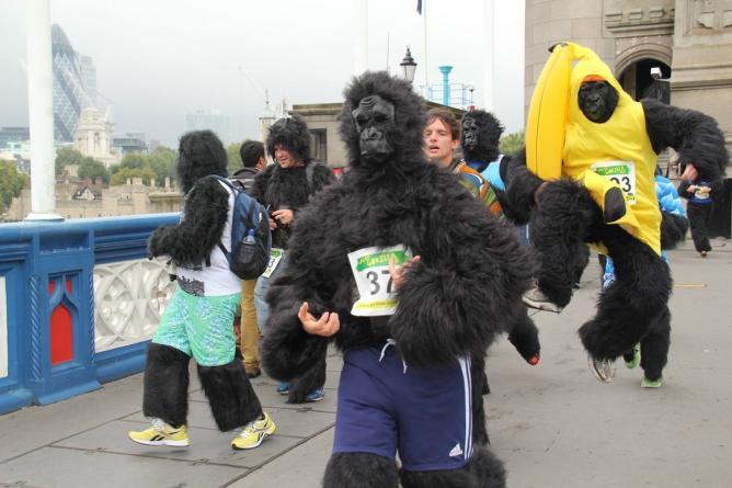 Gorilla Run 2014   © The Gorilla Organisation