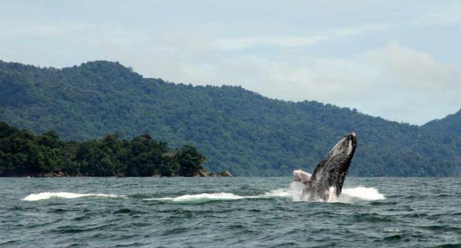 Whale watching in Nuquí | © Flickr