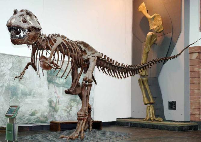 T-Rex | Courtesy of Schenckenberg Naturmuseum