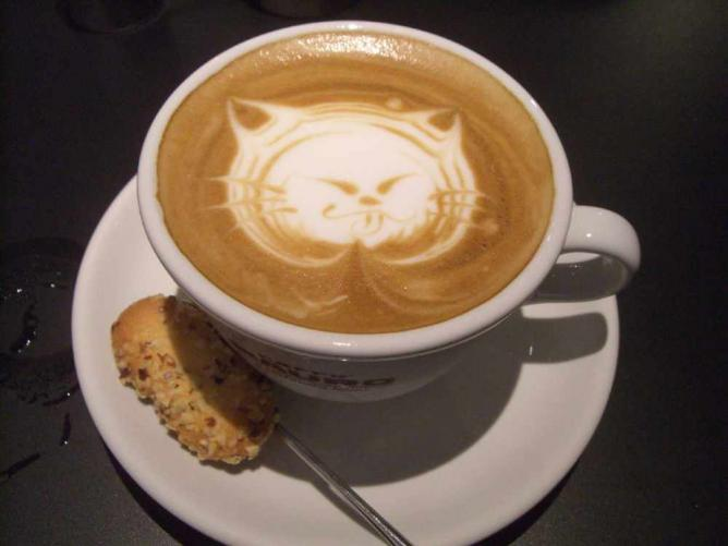 Cat cappucino   © akaitori/Flickr