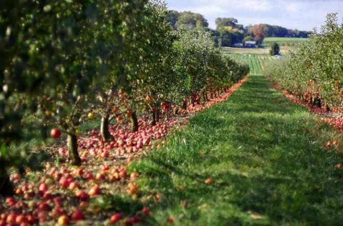 Apple Orchard | © Jeff Kubina/Flickr