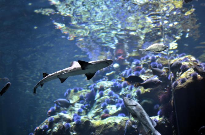 Shark at California Acadmey of Sciences |  © Joseph Bylund/Flickr