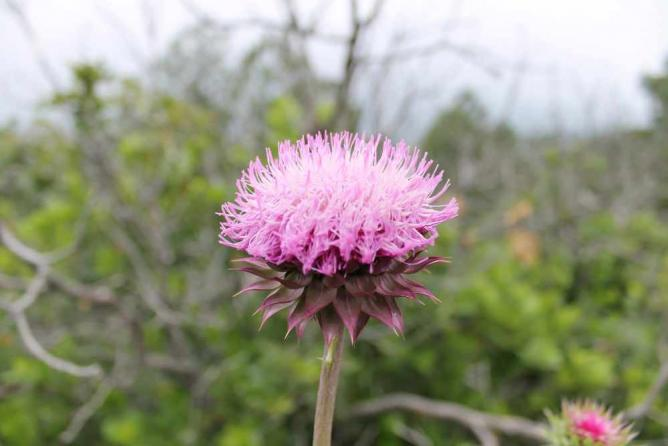 A Flower at Cheyenne Mountain State Park