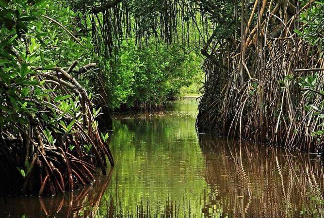 Parque Nacional Laguna de Tacarigua