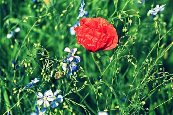 Wild flowers at le Domaine de Méric | © IsabelleBlanchemain/Flickr