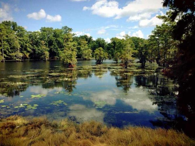 Black Bayou Lake | ©Cyril Fluck/Flickr