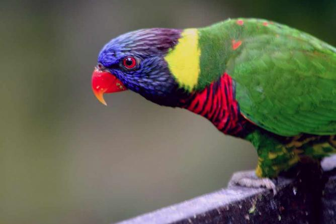 Bird at the Kuala Lumpur Bird Park l © Phalinn Ooi/Flickr