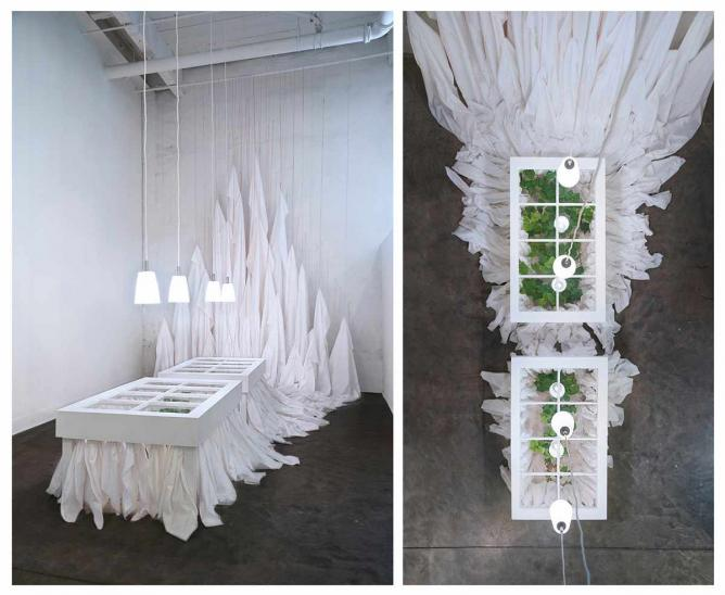 The Night She Wept, Sophia Sobers, 2014, sweet potato plants in tables made from windows, fabric, thread, and lights | Image courtesy of Sophia Sobers