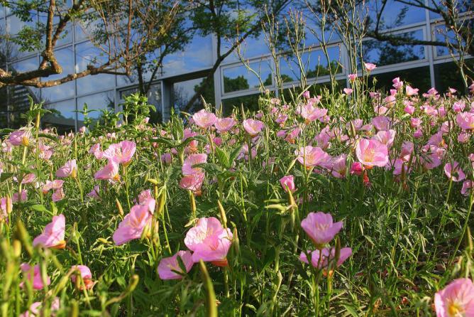 Flowers in the Botanical Garden