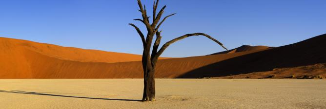 Deadvlei Tree |  © Neil Dankoff