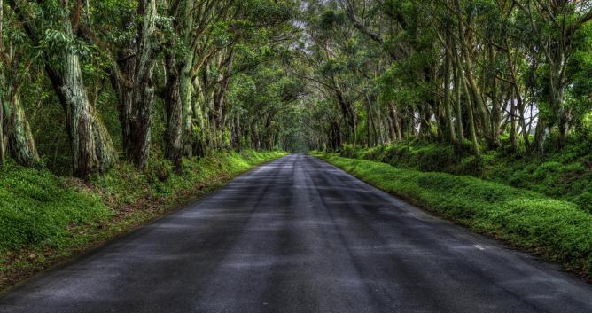 Canopy Road |  © Neil Dankoff