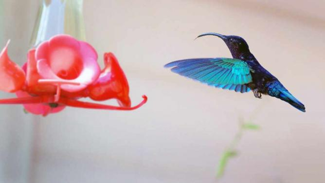 Colibri re-traité | © Mickaël/Flickr