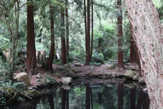 Stern Grove Pong | © Shawn/Flickr