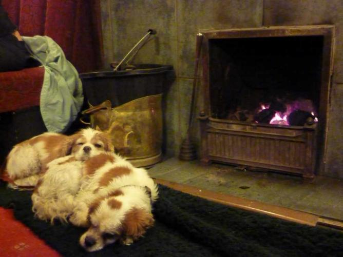 Dogs by the fire at The Golden Rule © Andrew Bowden/Flickr