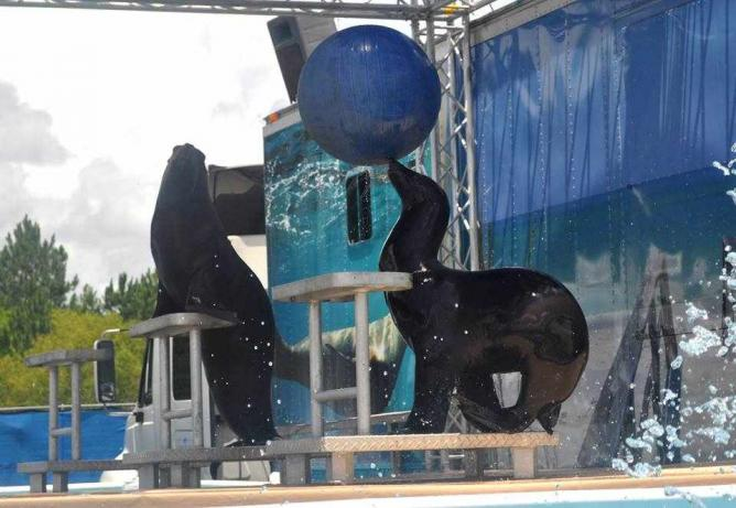 Sea lion splash show | Courtesy of Gulf Islands Water Park