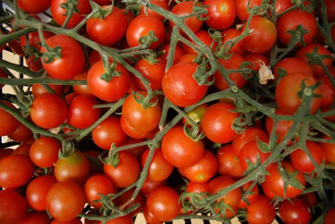 Organic farming in Cyprus I © George Groutas/Flickr