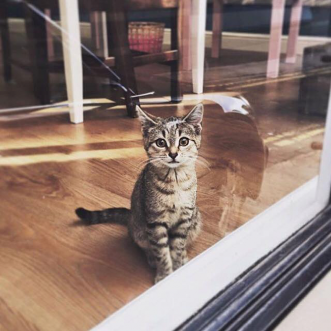 Come Inside For A Cuddle | Courtesy of Mog on the Tyne, Newcastle