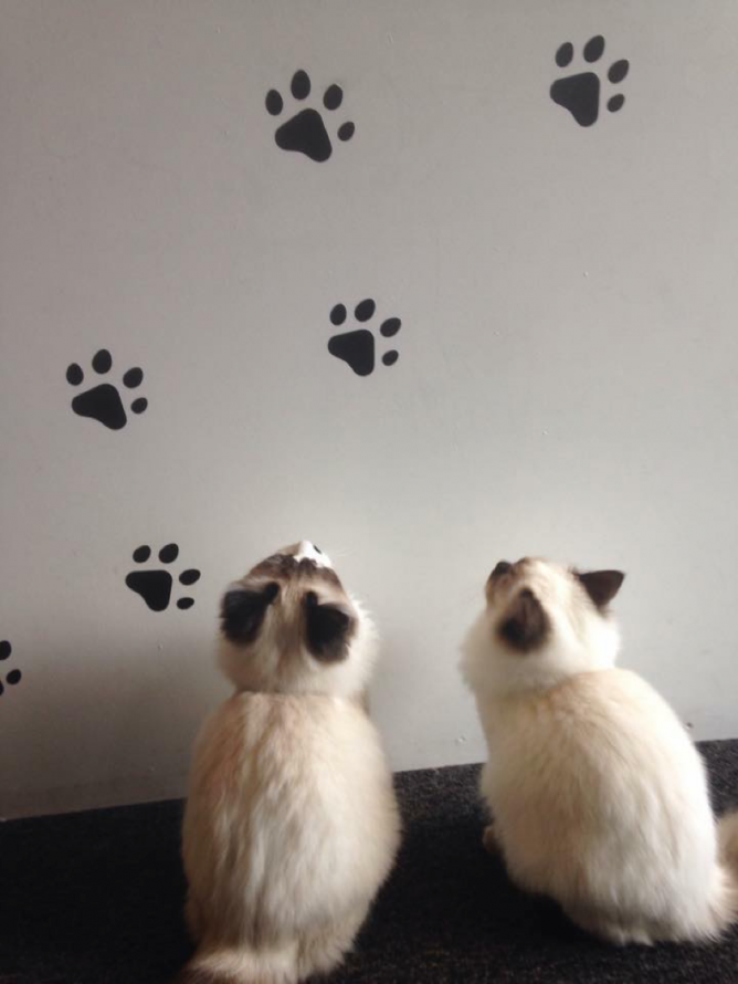 Double Trouble | Courtesy of Maison de Moggy
