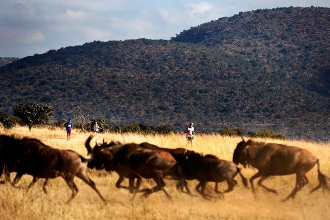 The Big Five Marathon