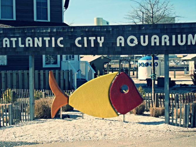 10 amazing things to see do in atlantic city new jersey Atlantic city aquarium hours