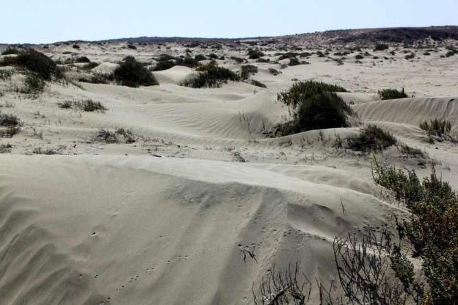 Limassol Sand Dunes © Christopher Agathangelou/LN-LM.com