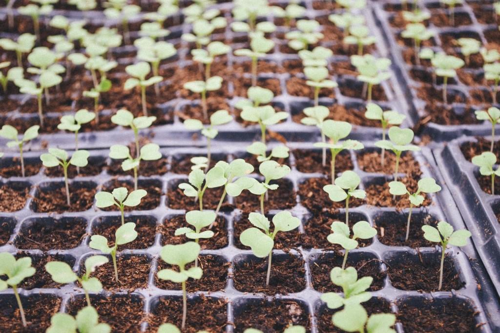 Growing Herbs | ©Pexels
