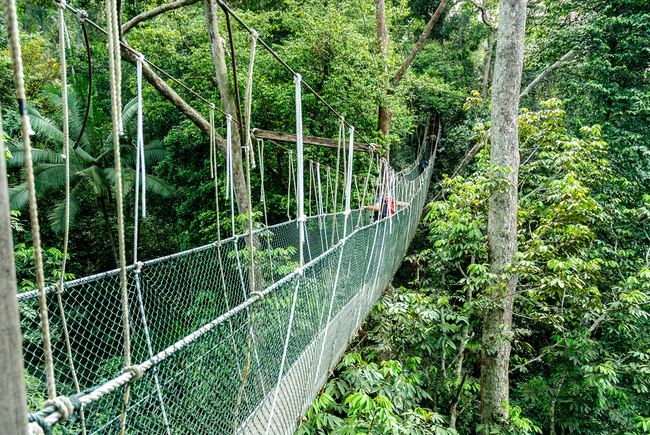 Canopy walkway through Taman Negara | © ahau1969/Shutterstock