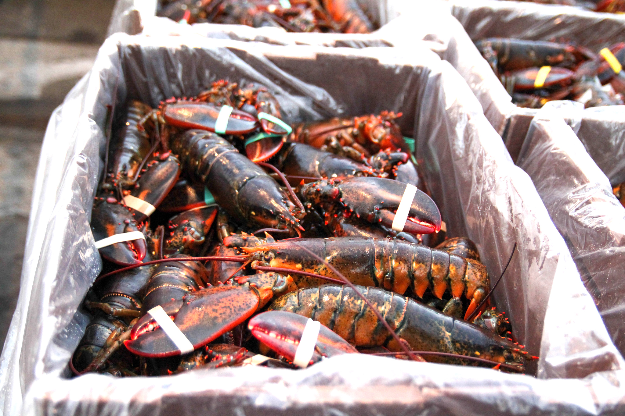 rockland maine lobster restaurants