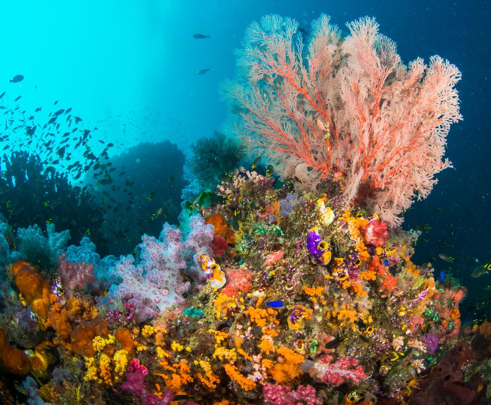 Colourful Corals in Raja Ampat ©Sarawut Kundej / Shutterstock
