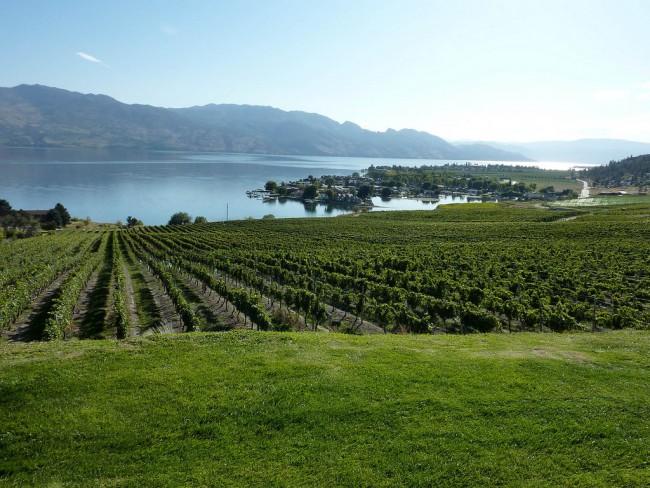 Kelowna Vineyard overlooking Okanagan Lake   © Kelowna09/WikiCommons