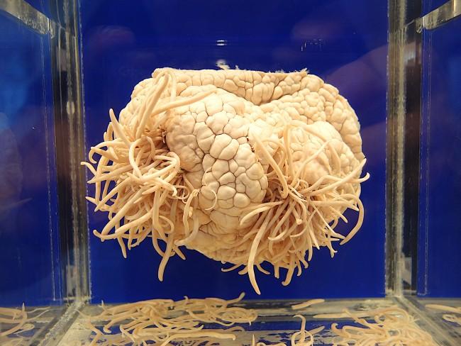 Display at Meguro Parasitological Museum   © Guilhem Vellut/Flickr