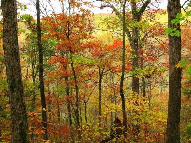 Ozark Woodlands| ©OakleyOriginals/Flickr